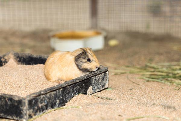 Bedding-small-animals